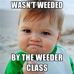 Weeder Success